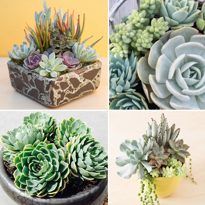 Succulents Fb2